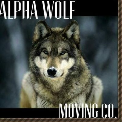 Alpha Wolf Moving